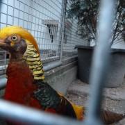 Volière vogels in het Hertenkamp Tiel
